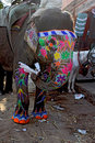 Traditional Indian painted elephant Royalty Free Stock Photo