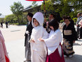 Traditional japanese wedding ceremony fukuoka april of in dazaifu shrine is a april in fukuoka japan Royalty Free Stock Images