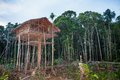 Traditional Koroway house perched in a tree above the ground, Royalty Free Stock Photo