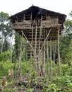 Traditional koroway house perched in a tree indonesia new guinea irian jaya onni village june local people irian jaya new Royalty Free Stock Photos