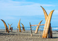Traditional peruvian small reed boats caballitos de totora straw still used by local fishermens in peru Stock Photography