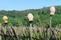 Traditional ukrainian clay pots on wicker fence Royalty Free Stock Photo