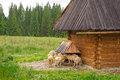 Traditional wooden hut in tatra mountains poland Royalty Free Stock Photos