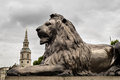 Trafalgar Square Barbary Lion at the base of Lord Nelson's Column, London, England, UK Royalty Free Stock Photo