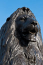 Trafalgar square lion at the base of nelson s column at in london england against a blue sky Royalty Free Stock Photo