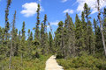 Trail in algonquin park ontario canada wooden Royalty Free Stock Images
