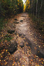 Trail in the autumn woods landscape of nature Stock Photography