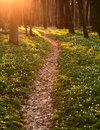 Trail in blossoming green spring forest, nature background Royalty Free Stock Photo