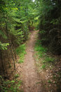 Trail in a dense forest Royalty Free Stock Photo