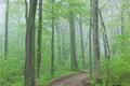 Trail Through Foggy Spring Forest