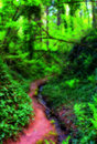 Trail Into Forest Royalty Free Stock Photo