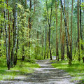 The trail in the forest with birches and pines in a spring day Royalty Free Stock Photo