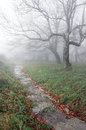 Trail in the forest with mysterious trees fog and Royalty Free Stock Photography