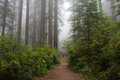 Trail in the forest, Redwood National Park, California USA Royalty Free Stock Photo