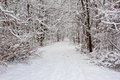 Trail after fresh snow at a park in kent county mi a Royalty Free Stock Photography