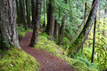 Trail through the Hoh Rainforest Royalty Free Stock Images