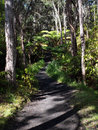 Trail in the jungle Royalty Free Stock Photo