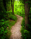 Trail through lush green forest in codorus state park pennsylvania Stock Photos