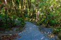 A Trail Through A Lush Green Rain Forest. Franz Josef Glacier National Park, New Zealand Royalty Free Stock Photo