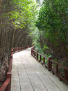 Trail in the mangrove forest for environment study Stock Image