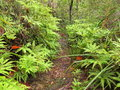 Trail through moist woodland Royalty Free Stock Photography