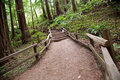 Trail in muir woods through national monument san francisco california Stock Image