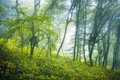 Trail through a mysterious dark forest in fog Royalty Free Stock Photo