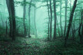 Trail through a mysterious dark forest in fog with green leaves. Royalty Free Stock Photo