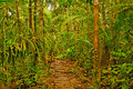 Trail near the napo river in the amazon rain forest Royalty Free Stock Images