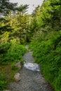 Trail through pine trees in the Smokies Royalty Free Stock Photo