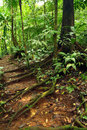 Trail through rain forest Royalty Free Stock Photo