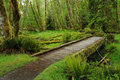 Trail in rain forest Royalty Free Stock Photography