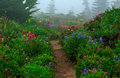 Trail in Spray Park, Washington State Royalty Free Stock Photo