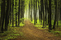 Trail in spring forest Royalty Free Stock Photo