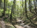 Trail in Springtime Royalty Free Stock Photo