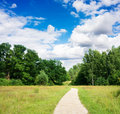 Trail in the summer the park Royalty Free Stock Photo