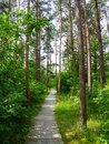 Trail in summer park Royalty Free Stock Photo
