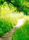 Trail in a sunny green summer forest the Royalty Free Stock Image