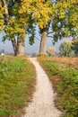 Trail between trees gravel path two great poplar Stock Photo