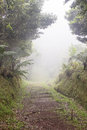 Trail Through the Tropics in Dense Fog Stock Image