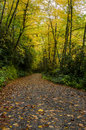 Trail Underneath Changing Leaves Royalty Free Stock Photo