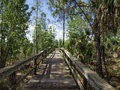 Trail walkway nature in eustis florida Royalty Free Stock Photo