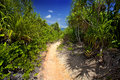 Trail way through curieuse island palm trees Stock Images
