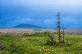 Trail in the wilderness a through beautiful newfoundland canada Royalty Free Stock Photo