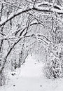 Trail in winter Royalty Free Stock Photo