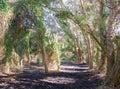 Trail through Wooded Wonderland Royalty Free Stock Photo