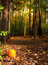Trail in the woods a forest lined with pumpkins Stock Photos