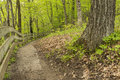 Trail In Woods Royalty Free Stock Photo