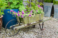 Trailing surfina petunias in a wooden wheelbarrow containing petunia plants Stock Photo