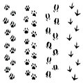 Trails of animals steps isolated on white background illustration Stock Photography